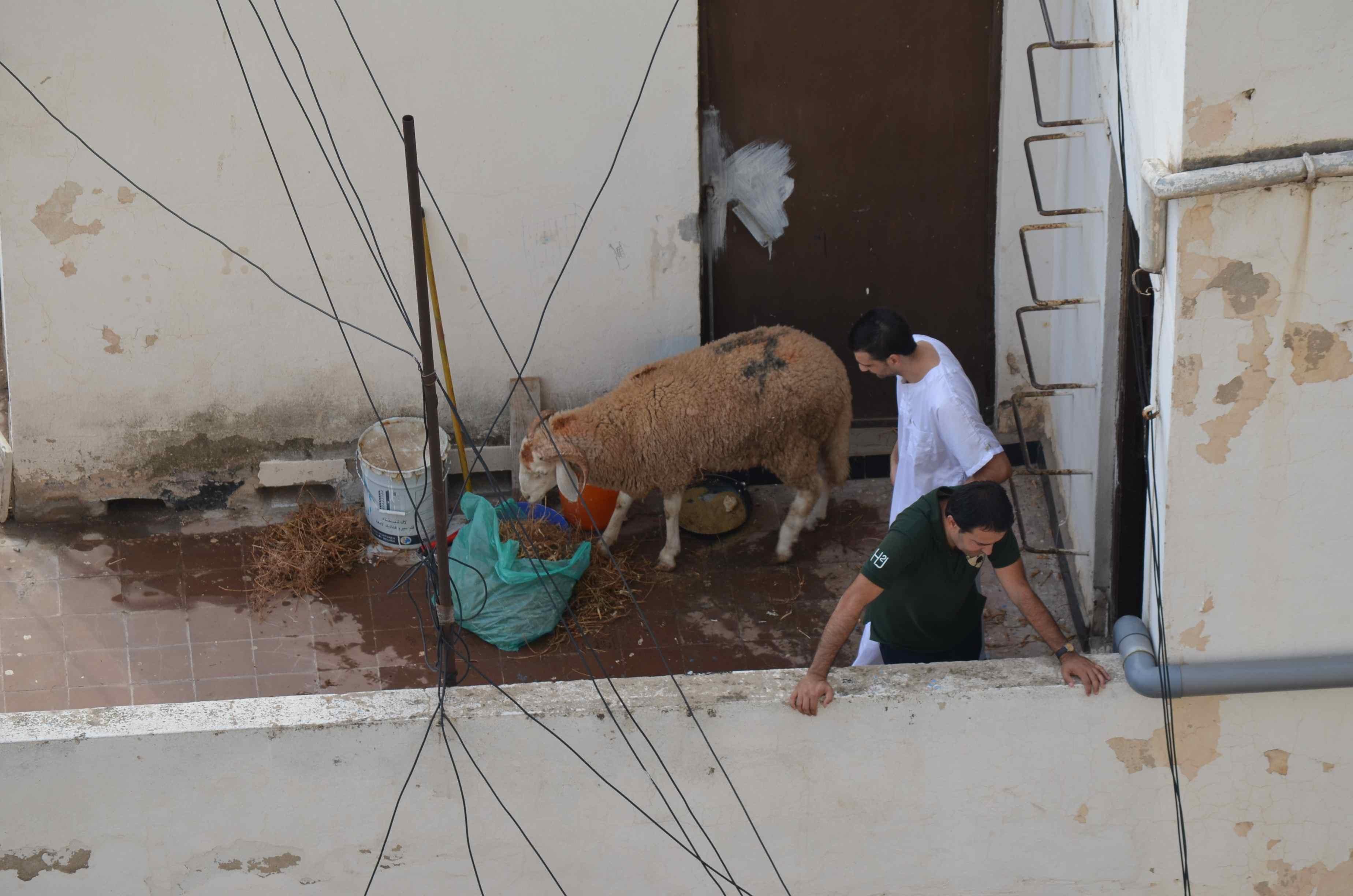 Aid à Alger